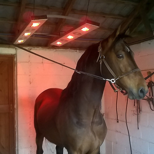 Equi-Therm 2 Horse Solarium (with Controller)