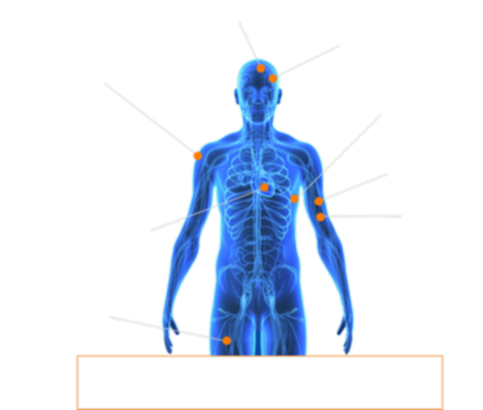 Graphic_Anatomy-min.png