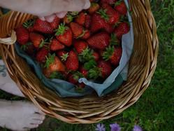☼ Ricetta: confettura di fragole