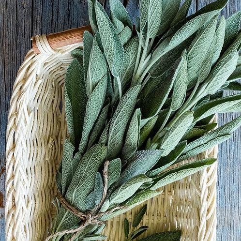 Salvia Officinale (estrogenica e per capelli splendidi)