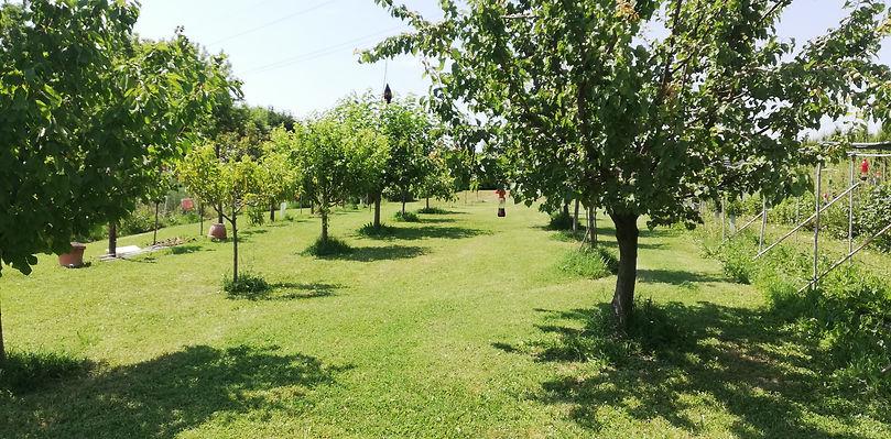 agricoltura frutta