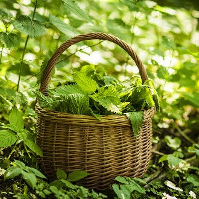 Ortica (foglie e radici)