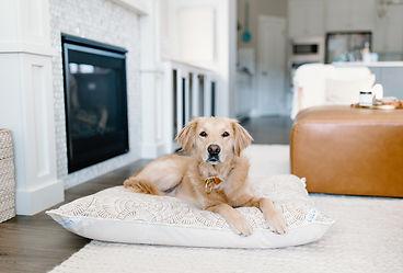 Custom dog bed pillow.jpg