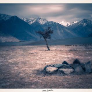 The Lone Tree Framing in Nubra