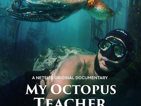 My Octopus Teacher Review - The Power of Bonding
