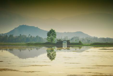 Dal Lake - Kashmir