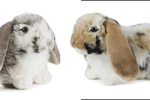 Living Nature Dutch Lop Eared Rabbits Gift Bundle