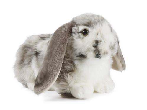 Living Nature Grey Dutch Lop Ear Rabbit