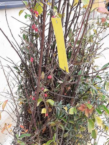 plants avec Fusain