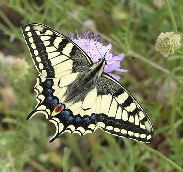 2016-06-10_machaon_edited.jpg