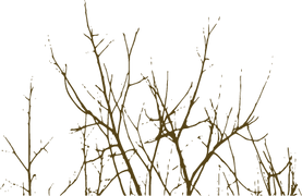branches,haie_brunes.png