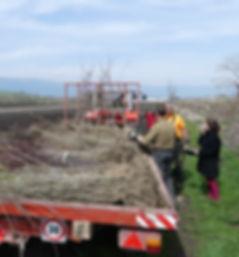 plantation Egger1.jpg