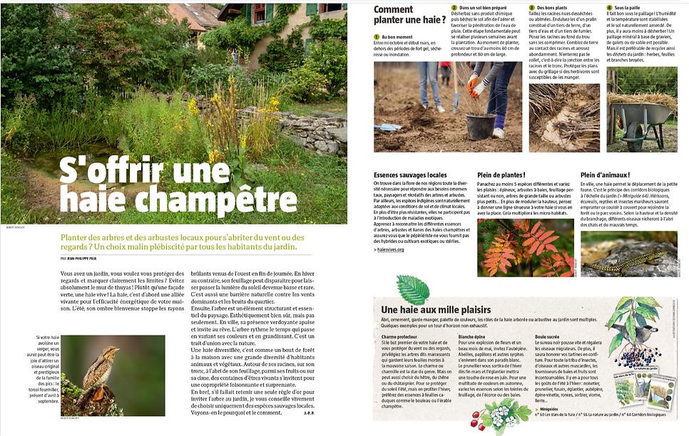 Salamandre_article Haie champêtre.PNG