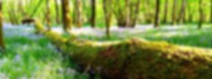 IMG_20180422_171403_edited_edited.jpg