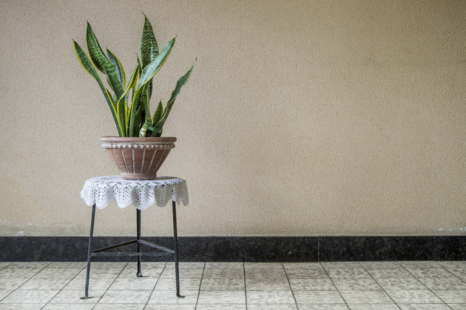 New study says indoor plants are more than pretty decor
