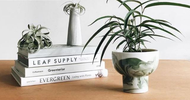 Move over monstera, these are the 5 next big indoor plants