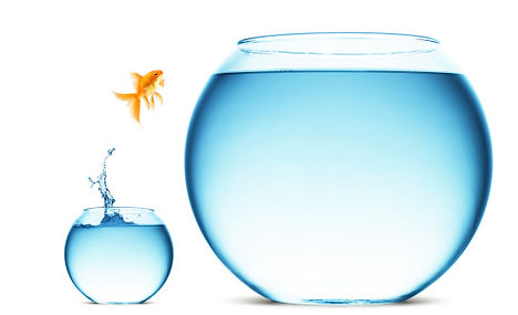 Goldfish Leaping, Increase Knowledge