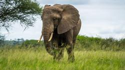 Elephant near tree