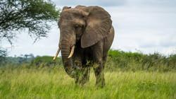 Elefant neben Baum