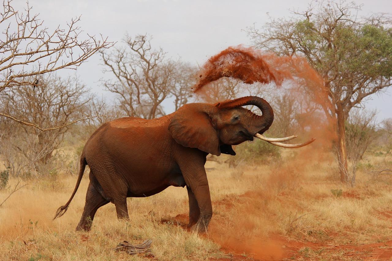 elephant takes a sand bath