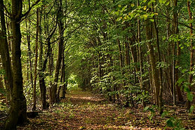 Ngongengare forest.jpg