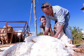 Sheep Shearing_QSC.jpg