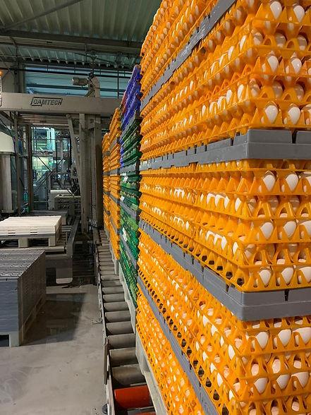 Depalletizer-supply-conveyors.jpeg