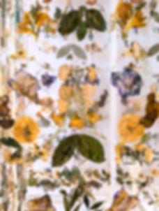 mein sind die jahre nicht - Theresa Berger, Lisa Zwinzscher, Foto Sarah Weiselowski, audiovisoelleinstallation, getrocknete Pflanzen,Andreas Gryphius, vertontes Gedicht, Barock, Verfall, memento mori, Lichtkasten, Lindenaumuseum Altenburg, Weimar, Apolda