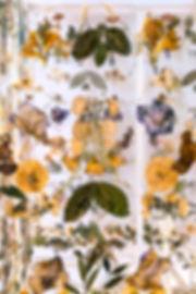 mein sind die jahre nicht - Theresa Berger, Lisa Zwinzscher, Foto Sarah Weiselowski, Lichtinstallation, getrocknete Pflanzen,Andreas Gryphius, vertontes Gedicht, Barock, Verfall, memento mori, Lichtkasten