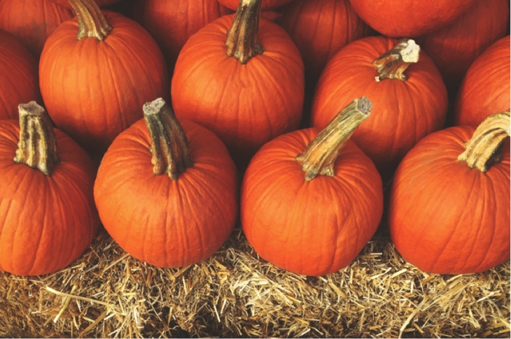 pumpkinpatch-gettyimages.png