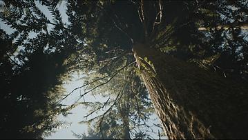 Captura de pantalla (116).png