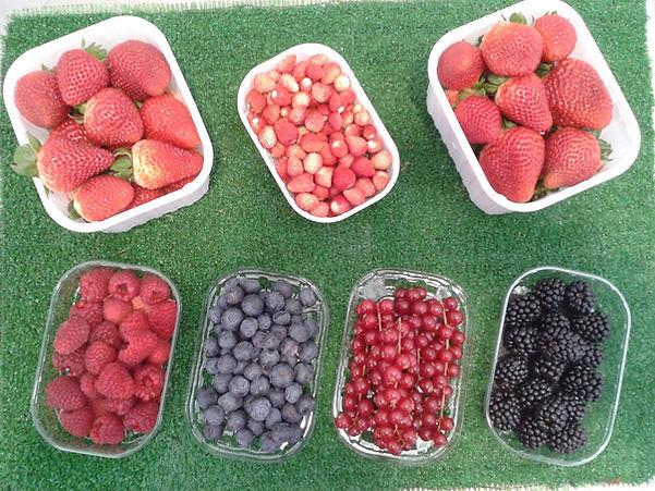 fruites envasades