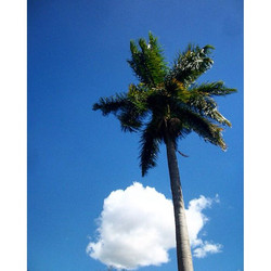 🌴 #palm #pool #vacation #collegefashionista