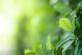 closeup-beautiful-view-nature-green-leaves-blurred-greenery-tree-background-with-sunlight-