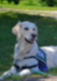service-dog-2098366.jpg
