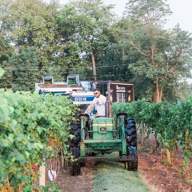 2018 Harvest-21.jpg