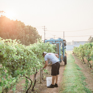 2018 Harvest-36.jpg