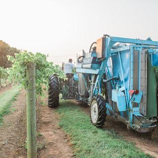 2018 Harvest-34.jpg