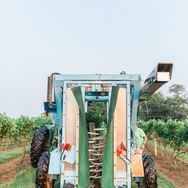 2018 Harvest-9.jpg