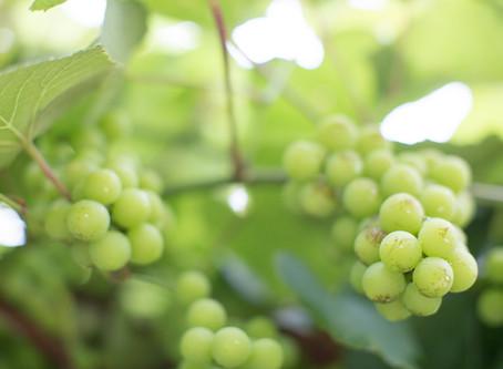 Common Types of Wine (Wine 101)