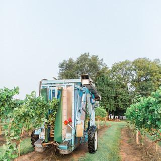 2018 Harvest-11.jpg