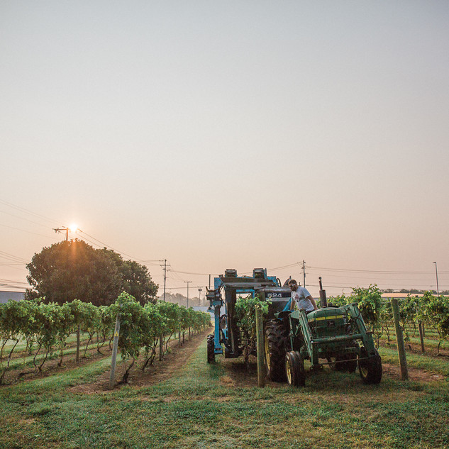 2018 Harvest-24.jpg