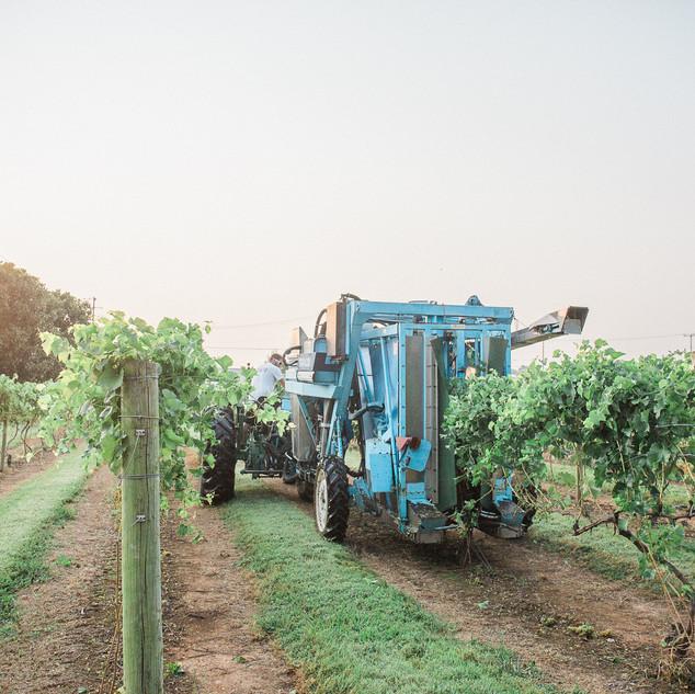 2018 Harvest-35.jpg