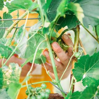 2018 Harvest-17.jpg