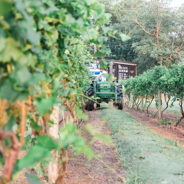 2018 Harvest-20.jpg
