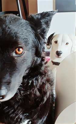 Maggie and Milo...The Management