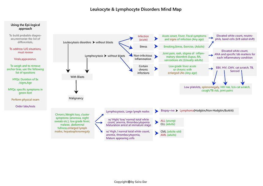 Leukocyte _ Lymphocyte Disorders Mind Ma