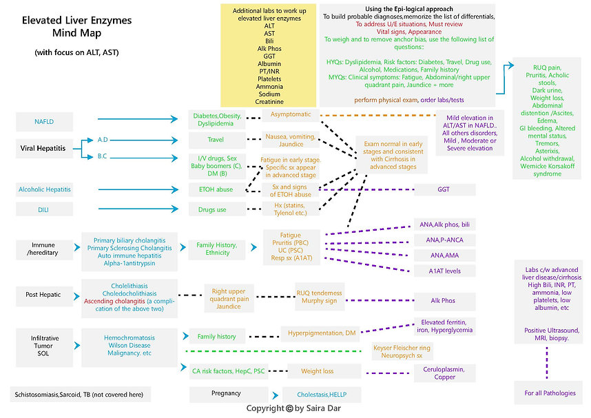 Elevated Liver Enzymes Mind Map .jpg