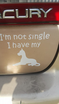 Not Single - Have my.jpg