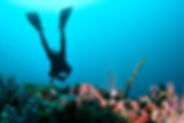 scuba-diver-PCAPTRV.jpg